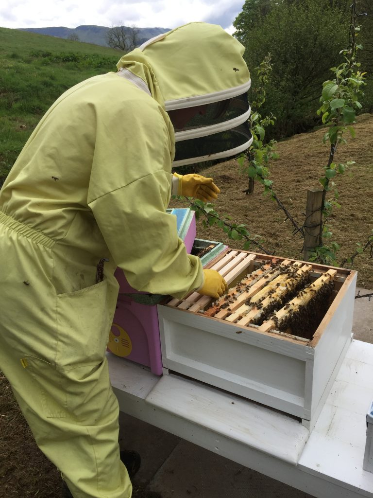 beekeeping in Fintry